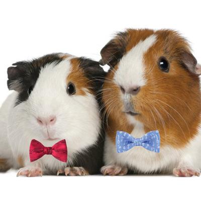 Guinea Pigs in Bow Ties